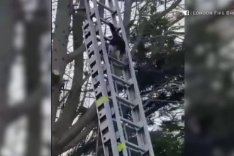 Reacția neașteptată a unei pisici care nu a mai putut coborî din pom, când pompierii au venit să o dea jos
