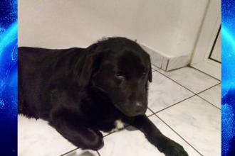 Un cățeluș a murit la scurt timp după ce a fost adoptat de la un adăpost din Arad. Îngrozitor ce au descoperit proprietarii