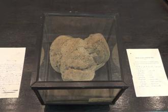 Cea mai veche pâine din lume poate fi admirată la Muzeul de Istorie din Galați