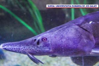 Cercetătorii români au găsit în Delta Dunării specii de plante și pești considerate dispărute