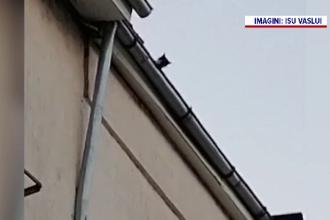 Cum a fost salvată o pisică de pe acoperișul unui bloc cu patru etaje din Vaslui. VIDEO