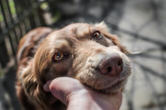 Câine legat de mașină și târât kilometri întregi. Poliția Animalelor a găsit imediat proprietarul animalului și a luat măsuri