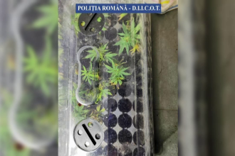 Un bărbat de 36 de ani din Buzău, arestat preventiv. Polițiștii au găsit la el acasă 69 de plante de canabis