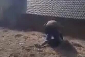 VIDEO. Un antrenor de fotbal, filmat în timp ce bate un minor. Poliția îl cercetează pe agresor