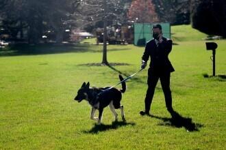 Major, unul dintre câinii lui Joe Biden, a mușcat un îngrijitor al parcului de la Casa Albă