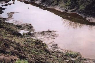 Romanii isi otravesc singuri apele cu uleiul alimentar folosit la gatit