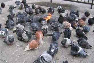 O batrana creste zeci de caini, pisici si porumbei in curte si in casa, spre disperarea vecinilor