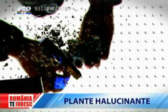 Romania, te iubesc!: Plante halucinogene vandute legal in Romania