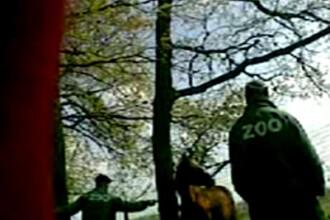 Acuzatii socante la Zoo Braila: cai omorati pentru a hrani leii!