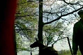 Angajatul Zoo Braila, care a ucis un cal, a fost DOAR amendat!