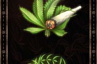 Fara droguri legale in Vaslui! Magazinele abia deschise au si fost inchise