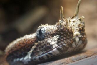 Panica in Florida! Serpi, iguane si crocodili ataca oameni!