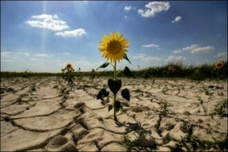 Romania, la un pas de declarare a starii de calamitate din cauza secetei!