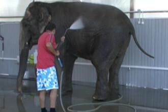 Un pui de elefant de 142 kg a facut senzatie la gradina zoo din Melbourne