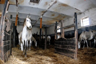 Primaria a luat in grija caii de la Fierbinti,dar n-are bani sa-i intretina