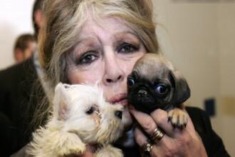 Brigitte Bardot denunta demersurile pentru eutanasiere, desi nu stie nimic despre situatia din tara