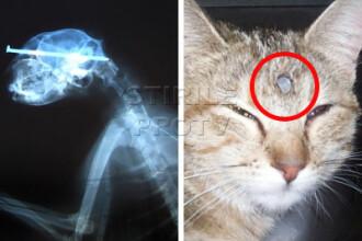 Miraculos! O pisica a trait cu un cui in cap! Un chirurg a salvat-o