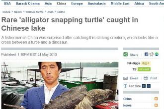 Testoasa aligator, monstrul pescuit din lac!