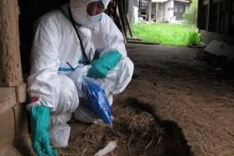 Condamnate la moarte sigura. Sute de mii de animale pier la Fukushima
