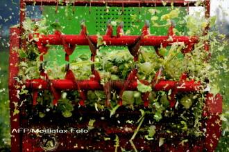 Despagubiri pentru agricultori in scandalul E-coli. Statul le da 3,7 mil euro