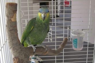 Coco, papagalul vorbitor care isi zice Pityuka, fluiera dupa fete si latra la catei. Afla-i povestea