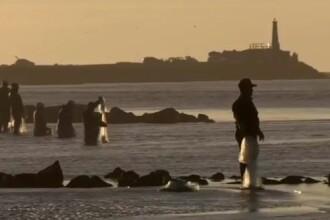 Descoperire infricosatoare pentru cativa pescari de pe raul Mures. Ce au vazut plutind pe apa