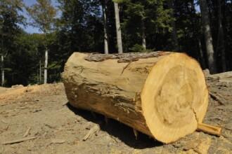 Holzindustrie Schweighofer anunta ca lupta impotriva taierilor ilegale de lemn din Romania. Ce a descoperit luna trecuta
