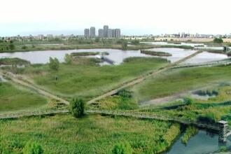 Lacul Vacaresti are avizul Academiei pentru a fi arie protejata, ramane problema proprietatii