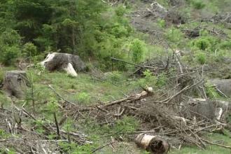 Doi preoti furnizau informatii obtinute de la enoriasi unei grupari care defrisa ilegal paduri