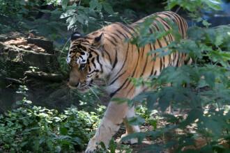Si animalele au parte de spiritul Craciunului. Surpriza facuta de niste copii la Gradina Zoologica din Ploiesti