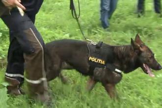 Doi caini adusi din Sibiu, special antrenati pentru gasirea cadavrelor, il cauta pe Abel Apostol