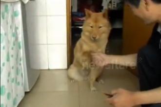 VIDEO. Duodou, cainele din China care rezolva calcule aritmetice. A inceput sa