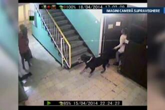 Scene de groaza in scara unui bloc din Bucuresti. Un caine rotweiller ataca plin de furie o mama si copilul ei. VIDEO