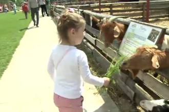 Copiii nascuti intre blocuri au ocazia sa vada pe viu capre si vaci. Oferta fermelor turistice de langa Bucuresti
