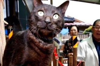 O pisica data disparuta acum 3 ani, dupa tsunami, s-a intors acasa. Unde au regasit-o stapanii ei