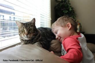 Ce se va intampla cu pisicuta care a salvat un copil atacat de caine.