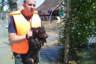 Pompierii timiseni au salvat mii de animale din gospodariile afectate de inundatii, in Serbia