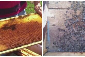 Milioane de albine au fost omorate de insecticidul imprastiat de fermieri. Pe cine dau vina apicultorii pentru dezastru