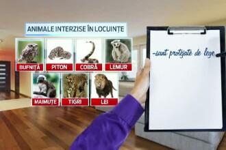 O maimuta poate ajunge sa coste si 2000 de euro. Ce trebuie sa stie romanii care vor sa-si cumpere animale exotice