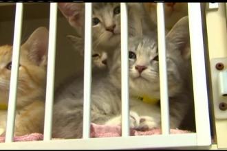 40% dintre pisici sunt purtatoare ale acestui microb. Ce a patit o femeie din SUA