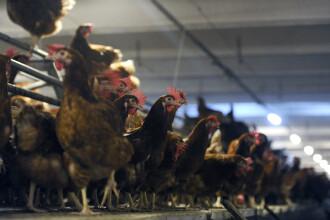 90.000 de pasari au murit carbonizate intr-un incendiu violent izbucnit intr-o hala a unei ferme din judetul Giurgiu
