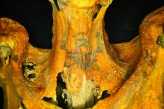 Descoperire unica. Ce au gasit cercetatorii cand au analizat mai atent mumia unei femei care a trait acum 3000 de ani