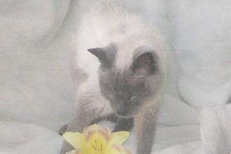 Motanul care a intrat in Cartea Recordurilor drept cea mai batrana felina domestica. Secretul longevitatii lui Scooter