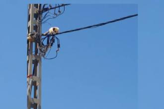 Pisica acrobata care nu se lasa data jos de pe cablurile de electricitate. Cum au incercat pompierii sa o ajute