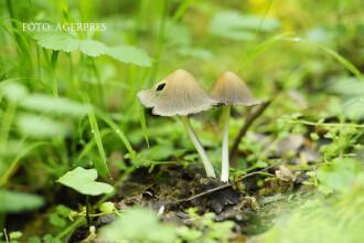 Greselile din cauza carora ciupercile comestibile devin OTRAVITOARE. De ce testul cu lingurita nu functioneaza