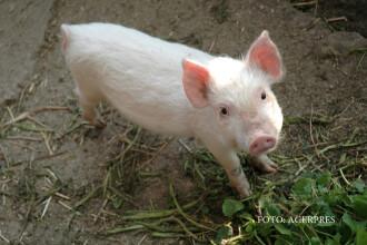 Informatiile pe care trebuie sa le verificam pe eticheta carnii de porc. Ce au descoperit studiile din ultimii ani