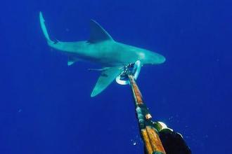 Facea scuba diving si s-a indepartat prea mult de barca. Ce a urmat dupa ce barbatul s-a trezit inconjurat de rechini