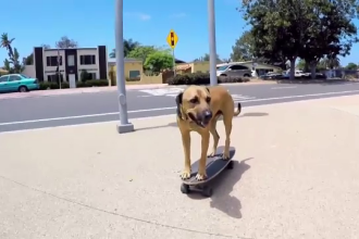 Cainele care merge singur pe skateboard. Stapanul sau l-a salvat din desert si l-a invatat peste 50 de comenzi
