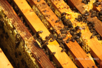 Indiciile care arata ca ati cumparat miere contrafacuta. Ce au aratat probele trimise la analize in Franta