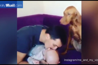 Reactiile unui caine gelos pe bebelusul nou aparut in familie. Gestul cu care vrea sa atraga atentia stapanului. VIDEO